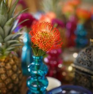 Bajacu Bohemian bright protea Turks and Caicos