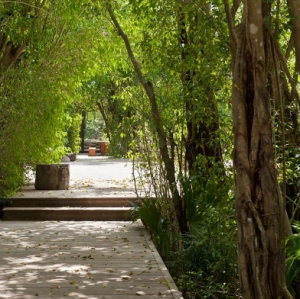 Donna Karan Sanctuary Parrot Cay Garden Paths