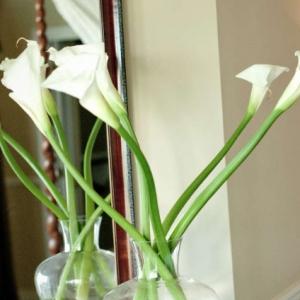 Point Grace Floral detail