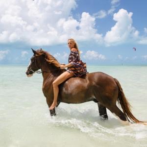 Horse_LongBay_0073