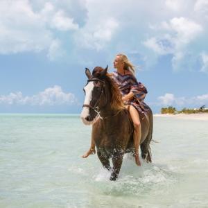 Horse_LongBay_0082