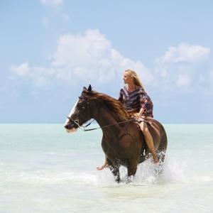 Horse_LongBay_0100